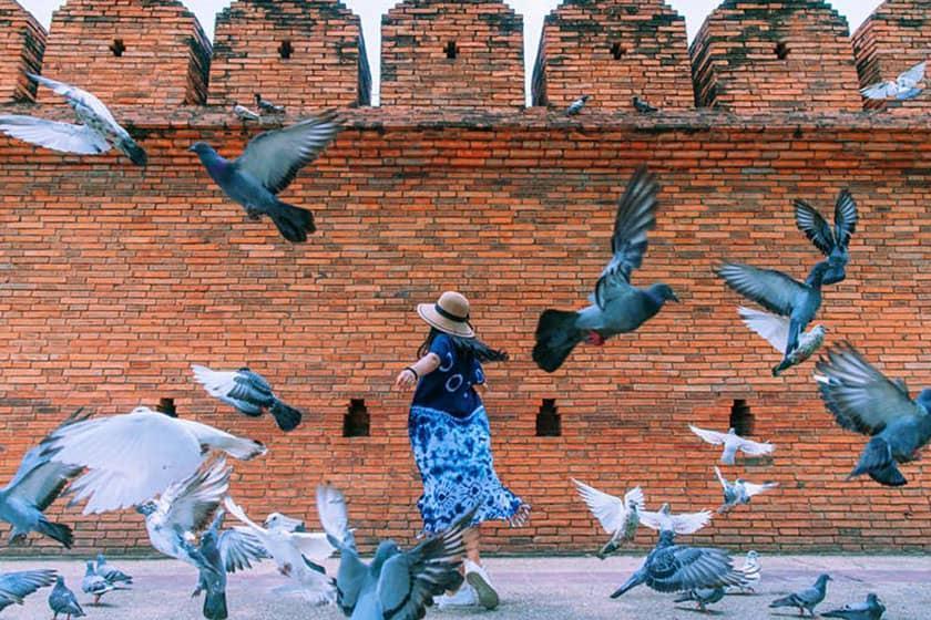 گردشگران تایلند برای خدمات ترساندن کبوترها پول می دهند