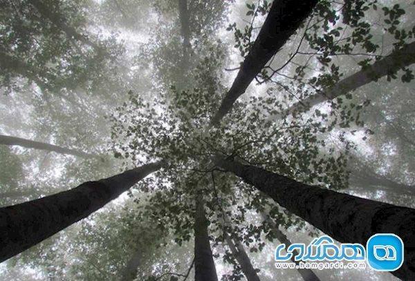 اقدامات نجات بخش هنگام گم شدن در جنگل