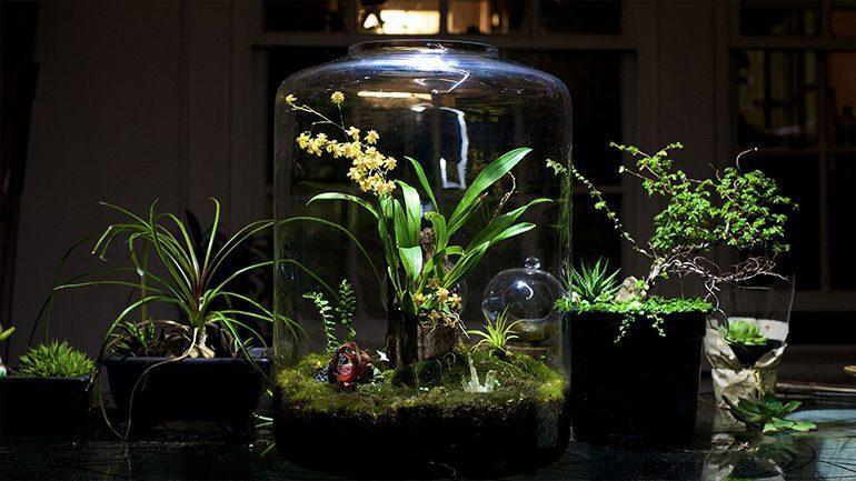 تراریوم، گلخانه ای کوچک