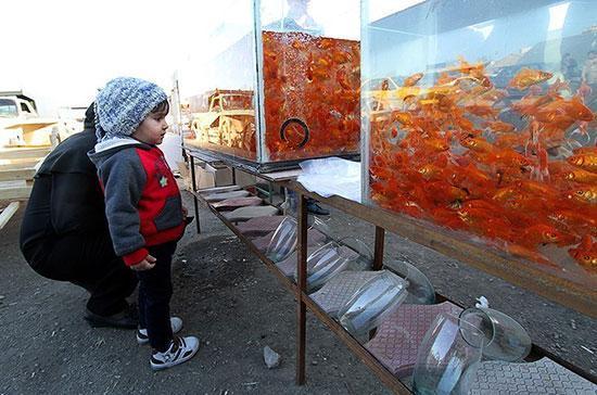 ماهی قرمز شب عید ناقل ویروس کرونا است؟