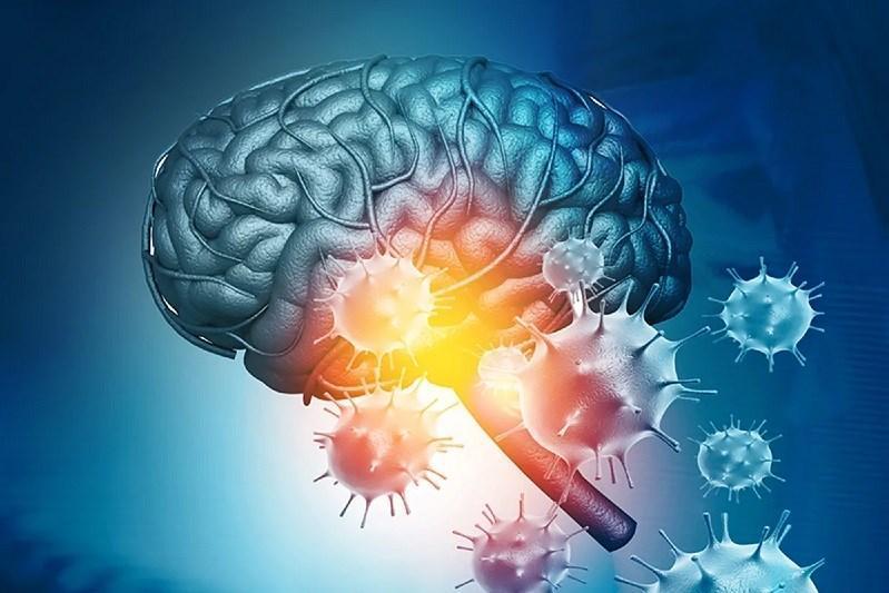 رفتار حیرت انگیز ویروس کرونا با سلول های مغزی