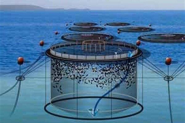 پرورش ماهی در قفس با تجهیزات ایرانی ممکن شد