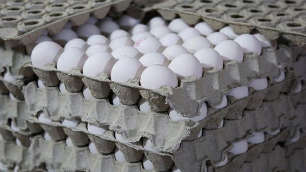 قیمت هر شانه تخم مرغ از 55 هزار تومان گذشت